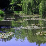 Monet Water Lily Pond - Giverny