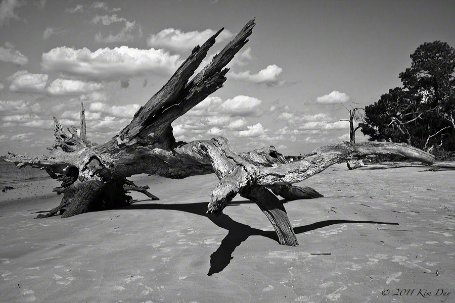 Black and White Driftwood Beach, Jekyll Island, GA