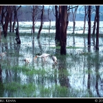 Flooded Lake Nakuru